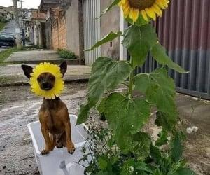 cachorro, dog, and flor image