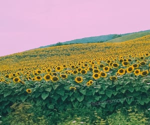 beautiful, field, and flowers image