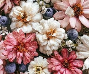 belleza, flores, and naturaleza image