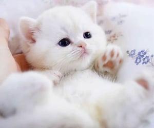 animal, cat, and cutie image