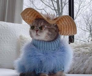 cat, fashion, and animal image