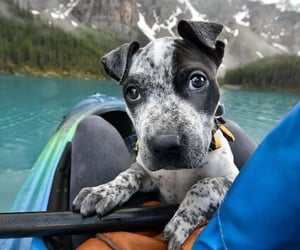 Animales, perro, and cute image