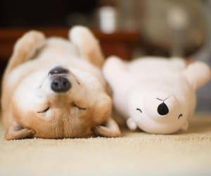 dog and stuffed toy image