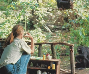 jane goodall, 1 of my heroes, and the queen of hearts image