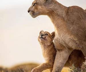 animal and puma image