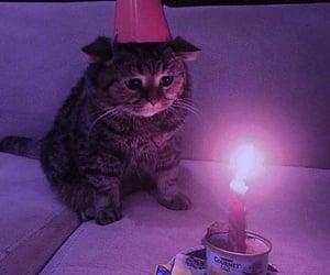 animal, cat, and birthday image