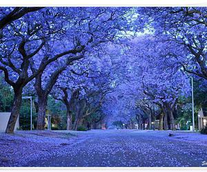 tree, purple, and jacaranda image