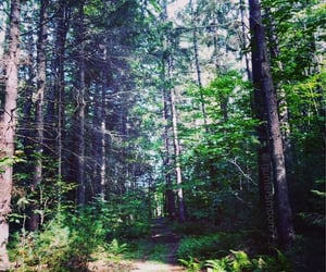 forest, motivation, and nature image