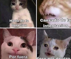gato, humor, and michi image
