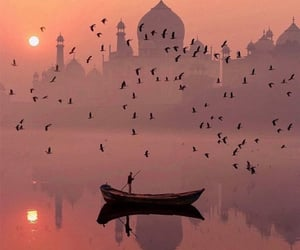 birds, breathtaking, and great view image
