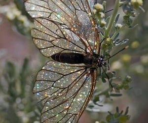 butterfly, glitter, and nature image