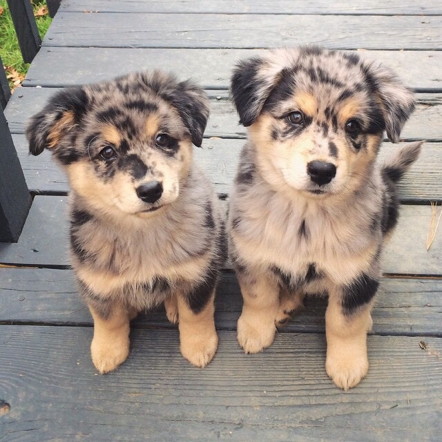 article, dog, and puppy image