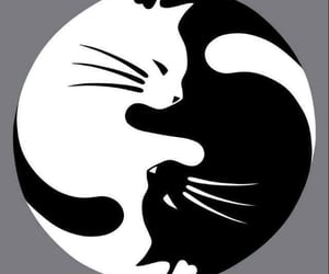 animal, black, and white image