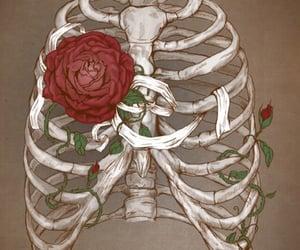 rose, bones, and art image
