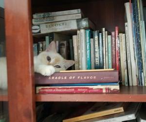 books, cat, and birman image