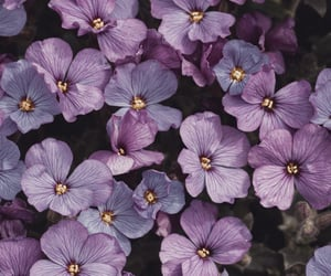 flowers, image, and plants image