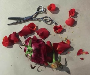 flowers, red, and alternative image