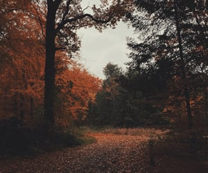 autumn, fall, and landscape image
