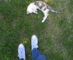 animal, shoes, and cat image