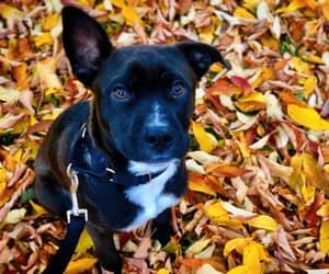 autumn, paws, and big eyes image