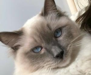cat, pet, and cats image