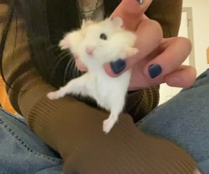 girl, hamster, and icon image
