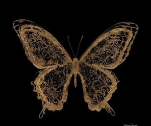 animal, butterfly, and dark image