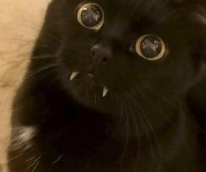 cat, black cat, and kitten image