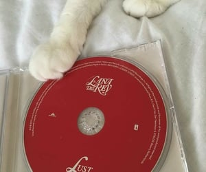 red, aesthetic, and cat image