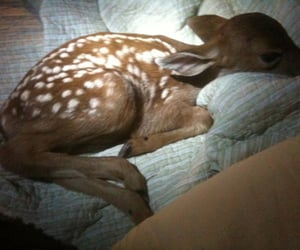 animal, fawn, and baby image