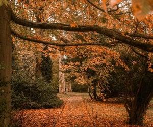 autumn, pumpkin, and spooky season image