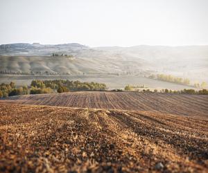 field, beautiful, and nature image