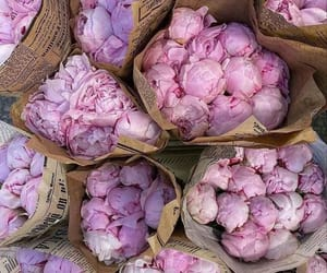 aesthetic, peonies, and pink image