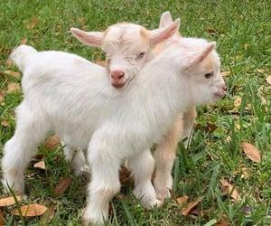 goats, cottagecore, and aesthetic image