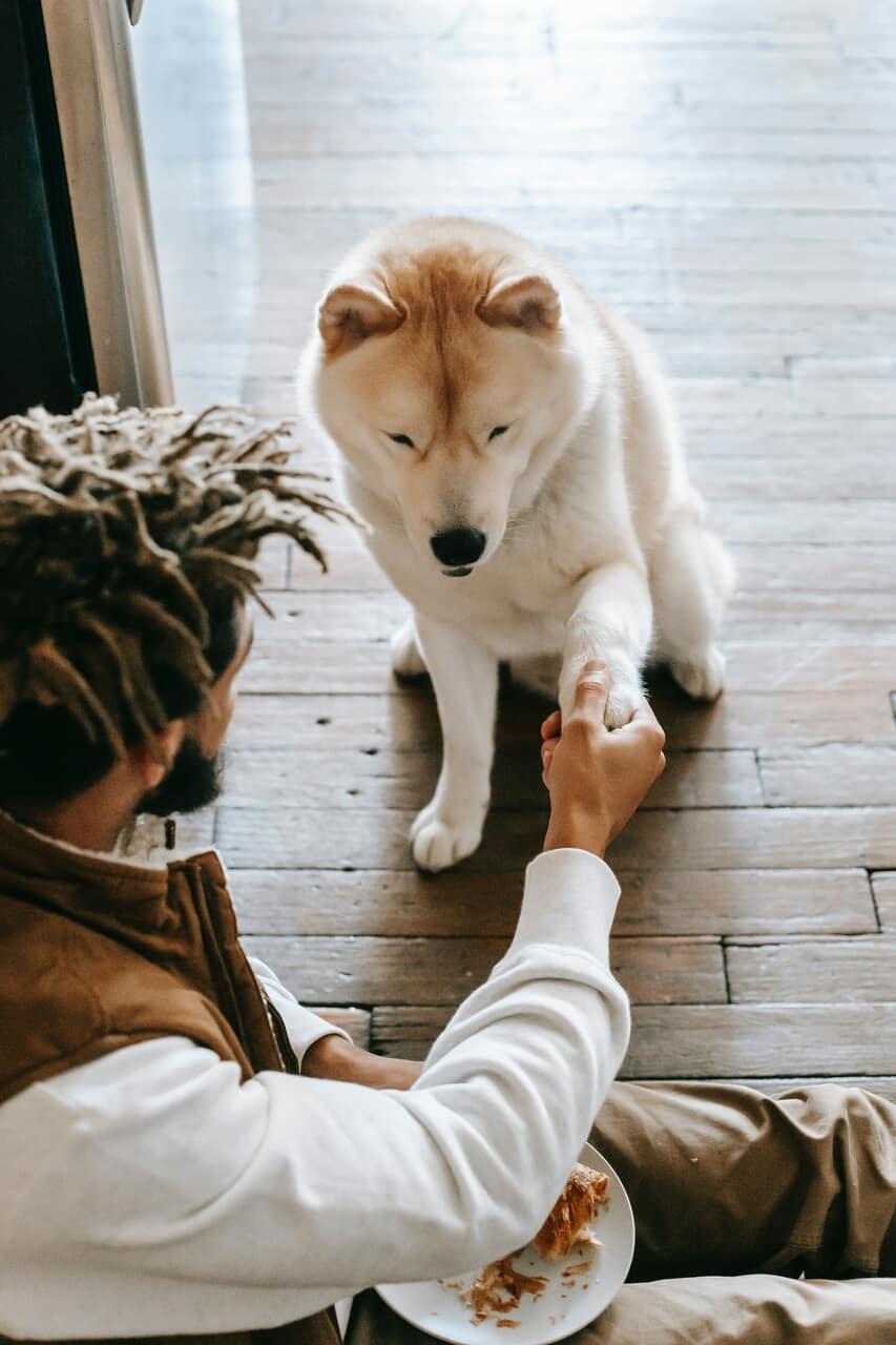 pet, doglover, and doglife image