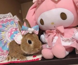 animals, bunny, and kawaii image