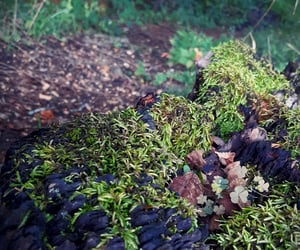 forest, green, and MOSSY image