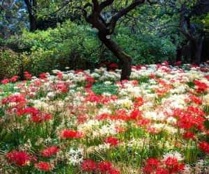 colores, flores, and primavera image