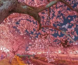 cherry blossom, exteriores, and paisajes image