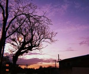 arvores, natureza, and noite image