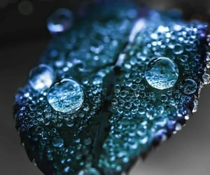 dewdrops, leaf, and water image
