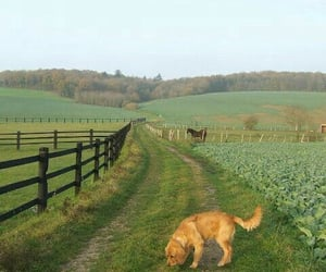 animals, dogs, and farmhouse image
