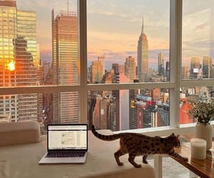 city, cat, and new york image