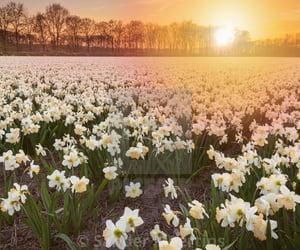 flower, garden, and hades image