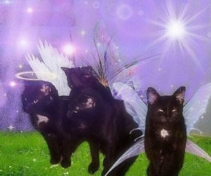 cat, fairy, and kittens image