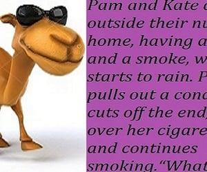 camel, fun, and jokes image
