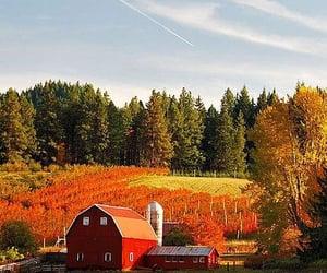 barn, cooper, and farm image
