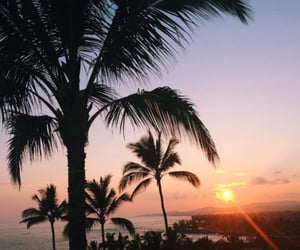 palms, paradise, and summer image