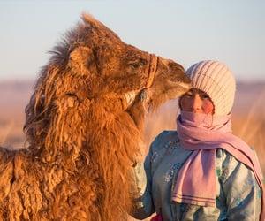 camel, girl, and mongol image