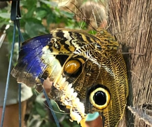 butterfly, colors, and fauna image